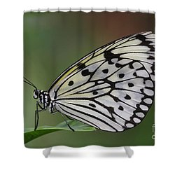 Come Sit With A Paper Kite Shower Curtain by Ruth Jolly