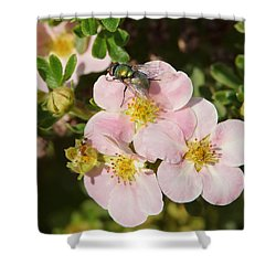 Come To The Ugly Bug Ball Shower Curtain by Ernie Echols
