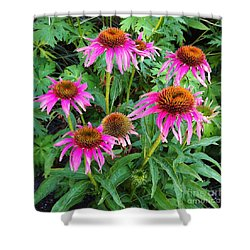 Shower Curtain featuring the photograph Comely Coneflowers by Meghan at FireBonnet Art