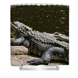 Comfy Cozy Shower Curtain by Lois Bryan