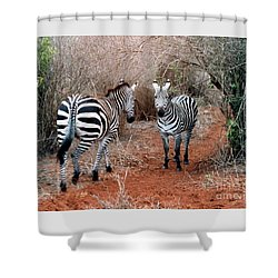 Shower Curtain featuring the photograph Coming And Going by Phyllis Kaltenbach