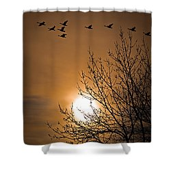 Coming Home In The Spring Shower Curtain by Bob Orsillo