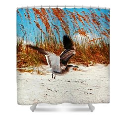 Windy Seagull Landing Shower Curtain by Belinda Lee