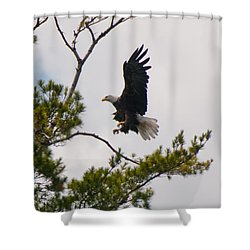 Shower Curtain featuring the photograph Coming In For A Landing by Brenda Jacobs