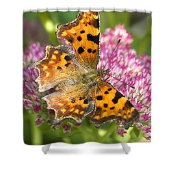 Comma Butterfly Shower Curtain by Richard Thomas