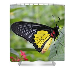 Common Birdwing Butterfly Shower Curtain by Judy Whitton