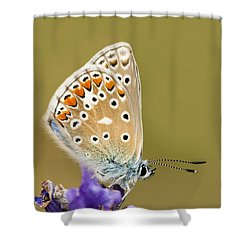Common Blue Shower Curtain by Anne Gilbert