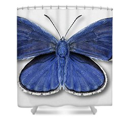 Common Blue Butterfly - Polyommatus Icarus Butterfly Naturalistic Painting - Nettersheim Eifel Shower Curtain