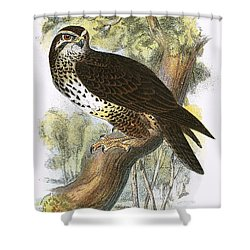 Common Buzzard Shower Curtain by English School