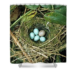Common Cuckoo Cuculus Canorus Egg Laid Shower Curtain by Jean Hall