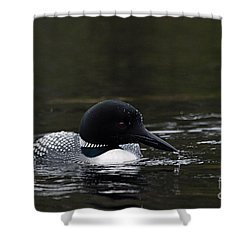 Common Loon 1 Shower Curtain