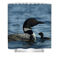 Common Loon Family Shower Curtain by James Peterson