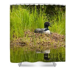 Shower Curtain featuring the photograph Common Loon Nesting by Brenda Jacobs