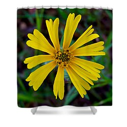 Common Madia In Park Sierra-ca Shower Curtain by Ruth Hager