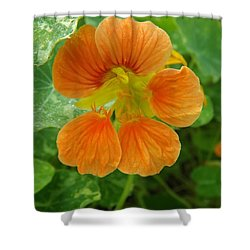Common Nasturtium Shower Curtain