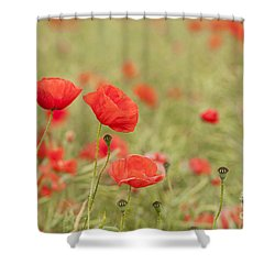 Common Poppies Shower Curtain by Anne Gilbert