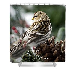 Common Redpoll Shower Curtain by Christina Rollo
