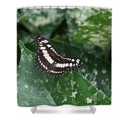 Common Sergeant Butterfly Shower Curtain