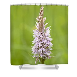 Common Spotted Shower Curtain by Anne Gilbert
