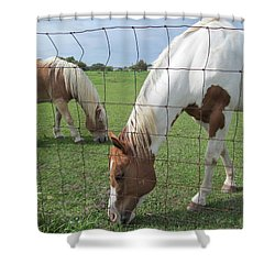 Shower Curtain featuring the photograph Company Of Two by Tina M Wenger
