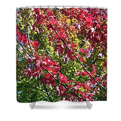 Shower Curtain featuring the photograph Complimentary Colors by Debbie Hart