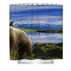 Composite Grizzly Stands In Front Of Shower Curtain