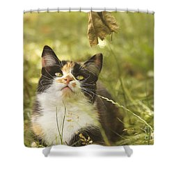 Concentration Shower Curtain by Jutta Maria Pusl
