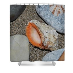 Shower Curtain featuring the photograph Conch 1 by George Katechis