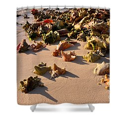 Conch Collection Shower Curtain