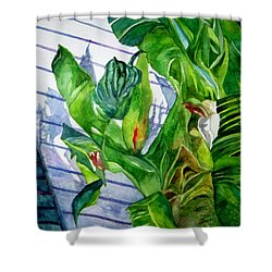 Conch House Tour Shower Curtain