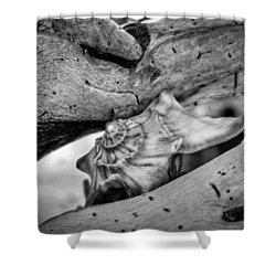 Conch Shell One Shower Curtain