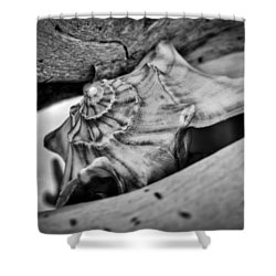 Conch Shell Two Shower Curtain