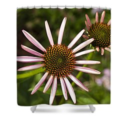 Cone Flower - 1 Shower Curtain by Charles Hite