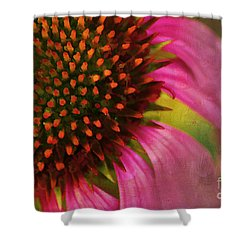 Coneflower Shower Curtain by Darren Fisher