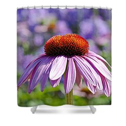 Coneflower Shower Curtain by Lana Enderle