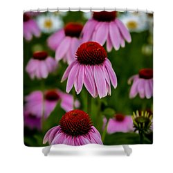 Coneflowers In Front Of Daisies Shower Curtain