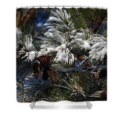 Cones Shower Curtain by Skip Willits