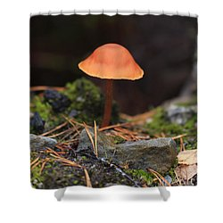 Conical Wax Cap Mushroom Shower Curtain by Louise Heusinkveld