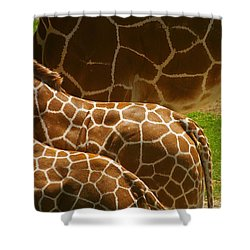 Connection Shower Curtain by Randy Pollard
