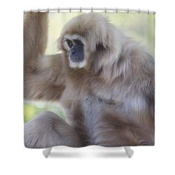 Contemplating Gibbon Shower Curtain by Melanie Lankford Photography