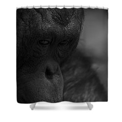 Contemplating Orangutan Shower Curtain