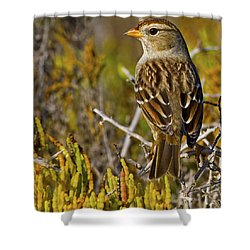 Shower Curtain featuring the photograph Contemplating The Day by Gary Holmes