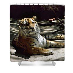 Content Tiger Shower Curtain