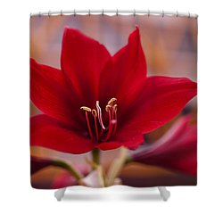 Content Tropics Shower Curtain by Miguel Winterpacht