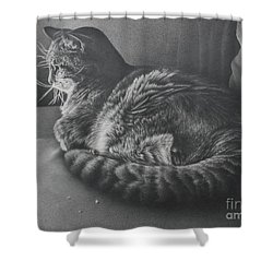 Shower Curtain featuring the drawing Contentment by Pamela Clements