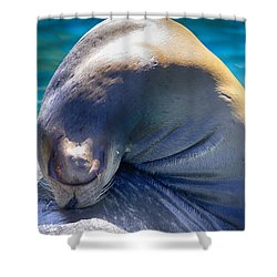 Contortionist Shower Curtain by Douglas Barnard