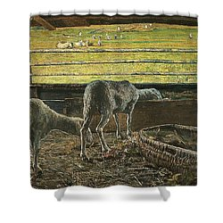 Contrast Of Light Shower Curtain by Giovanni Segantini