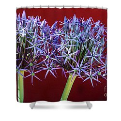 Shower Curtain featuring the photograph Flowering Onions by Roselynne Broussard