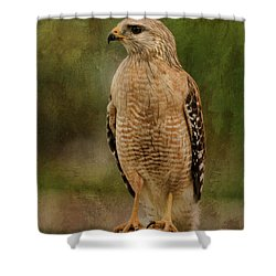 Convenience Store Hawk Shower Curtain by Deborah Benoit