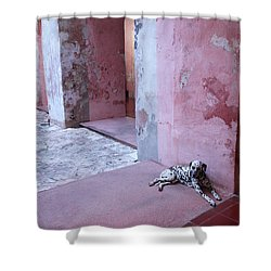 Convent Dog Shower Curtain